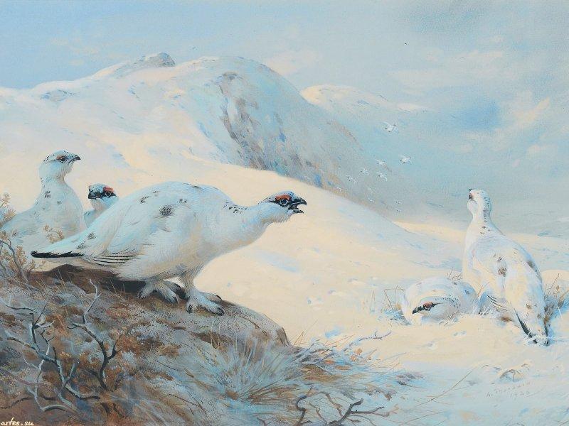 Непоседы птицы белые скачать бесплатно mp3